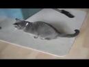 Коты извращенцы