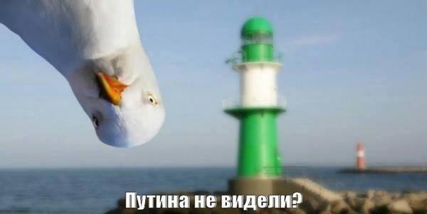 Путин и Медведев прибыли в оккупированный Крым совещаться по вопросу строительства Керченского моста - Цензор.НЕТ 3696
