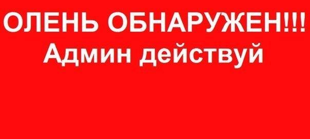 Правоохранители изъяли арсенал оружия и взрывчатку у жителя Херсонщины - Цензор.НЕТ 2465