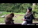 Аффенберг-гора обезьян в городе Салем Германия