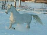 Александр Малинин,Никита Малинин - Белый конь