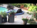 Vancouver bear spends afternoon chilling in a hot tub