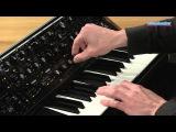 Moog Sub 37 Tribute Edition Analog Synthesizer Demo