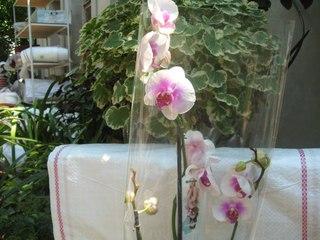 Орхидеи симферополь