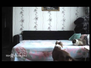 When the dog stays at home alone / Пока никто не видит
