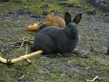 Фильм про кроликов я чуть не расстаела какие няФки
