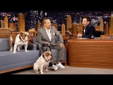 Ice T Brings His Bulldogs to The Tonight Show