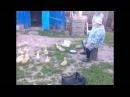 Бабулька строит гусей татарский прикол