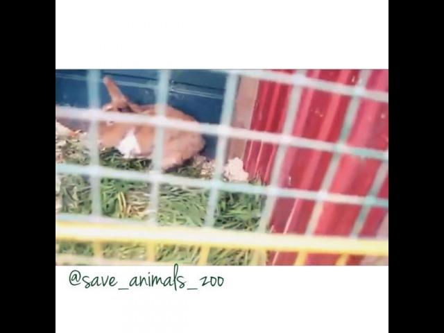 """Животным Нужна Твоя Помощь! on Instagram """"Кролики и оленята в с.Утесное 🐰😍 mothernature vl savenature cute petstagram instagram instagood beautiful likeforlike followme…"""""""