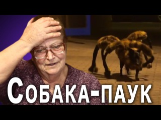 БАБУШКА РЕАГИРУЕТ на собаку-паука