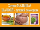 Не получается ЗАБЕРЕМЕНЕТЬ  ШАЛФЕЙ - лучший помощник! Salvia (sage) - a cure for infertility