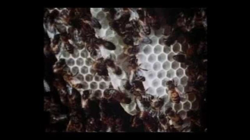 Mathematics of the Honeycomb (Part 1 of 2)