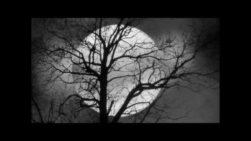 Nilüfer - Geceler