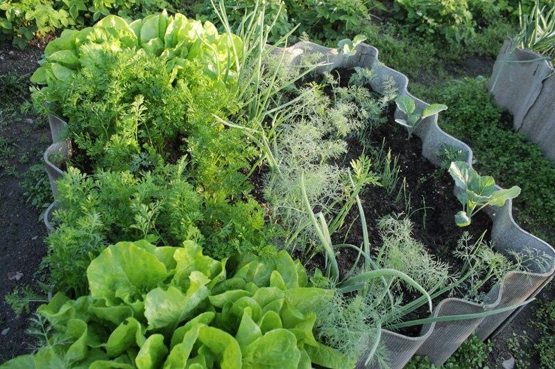 Салат - все, что нужно знать о салате