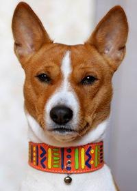 Поводки и ошейники для собак - купить в интернет