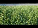 Ветер траву шевелит, она настоящая! смотришь и щекотно внутри