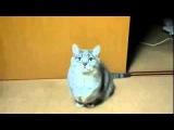 Что творят голодные котята! Приколы про котов и котят