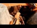 Мраморные тараканы Nauphoeta cinerea пир