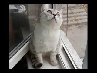 """Видео с """"застывшим"""" котом стало хитом Интернета. Кот сломался."""