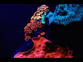 В глубинах Красного моря нашли светящиеся кораллы