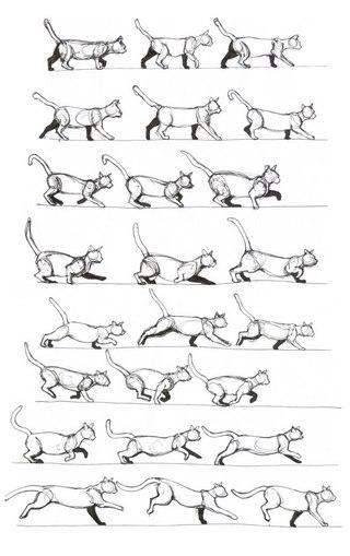 Туториалы на лапы у котов