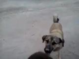 kangal köpeği - дети играет с Кангал собака, она как папа для детей :)