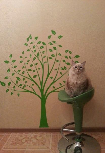 декоративная наклейка дерево фото клиентов в интерьере отзыв