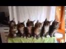 Котята синхронная реакция