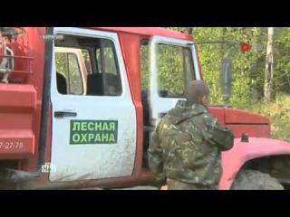 Огненный Байкал: в масштабных пожарах обвинили черных лесорубов