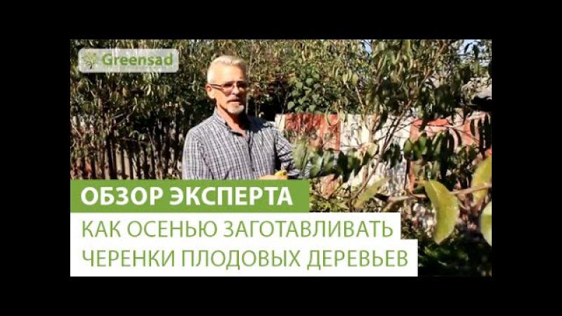 Как осенью заготавливать черенки плодовых деревьев