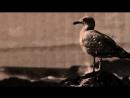 PAROV STELAR feat. GRAHAM CANDY - THE SUN (Klingande Remix) [Official Video]