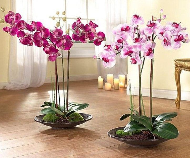 Уход за орхидеями в домашних условиях во время цветения