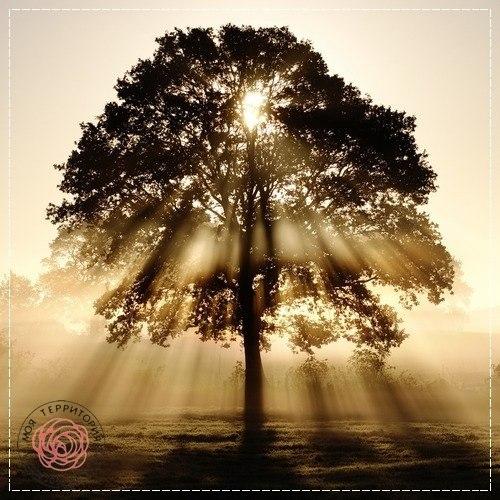 Дерево символ жизни и добра.