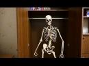 Танцующий скелет в шкафу - Dancing skeleton in the closet