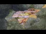 Фейри Тейл / Сказка о Хвосте Феи (1 серия)