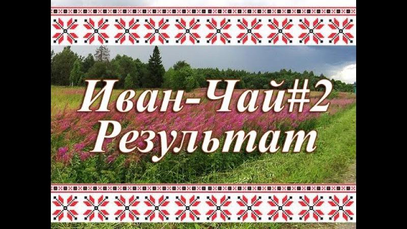 Переработка листьев Иван-Чая, ферментация, сушка и итог работы.
