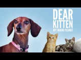 Dear Kitten My Friend Peanut