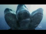Угроза из глубины 2 Атака трёхголовой акулы 3 Headed Shark Attack (2015)