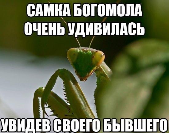 http://cs622923.vk.me/v622923410/3eaff/wQl1z7kNALw.jpg