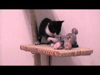 как сделать домик для котенка своими руками