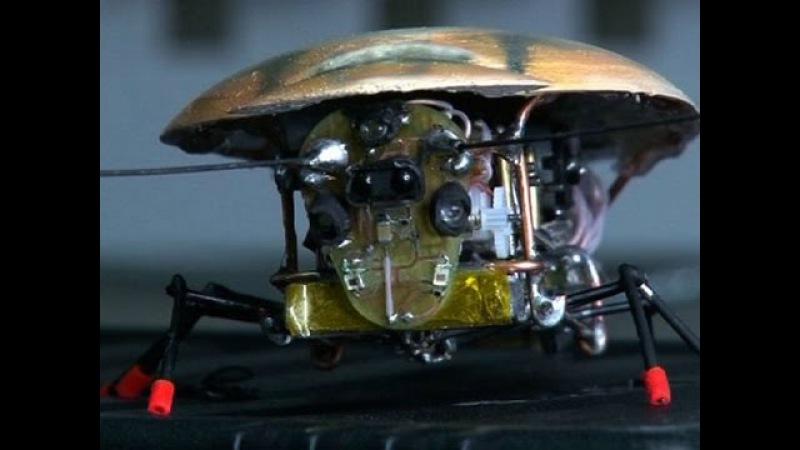 Таракан робот Российские ученые создали уникального Микротерминатор