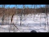 Снегоход Stels s800 РосомХа