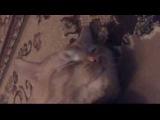 Ленивый рыжий кот Гоша говорит