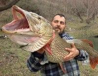 фото приколы про рыбу