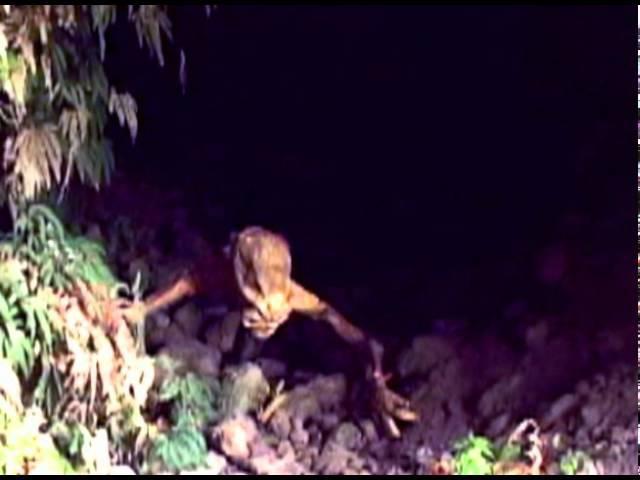 Winner Best UFO Sighting Alien Encounter Caught On Tape 2011