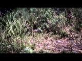 VINTERSORG - Lagornas Rov (OFFICIAL VIDEO)