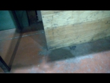 упс, чёрный скорпион, на работе под столом......