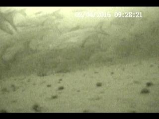 Видео запись с зимней рыбалки | Подводная камера AQUA-VU Micro Plus DVR