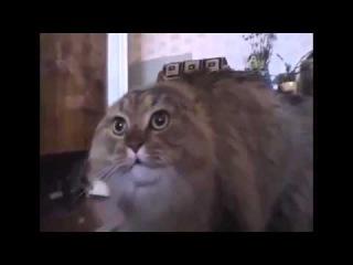 Поющий смешной кот  Единственный в мире говорящий кот