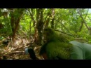 Shagged by a rare parrot Last Chance To See BBC Two